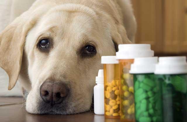 """""""狗药""""真能抗癌?有科学依据,但毒副作用无法预知"""